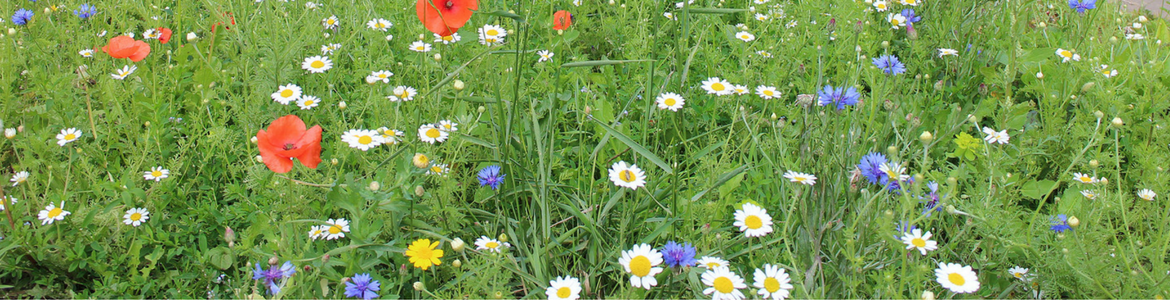A photo of grass and wild flowers