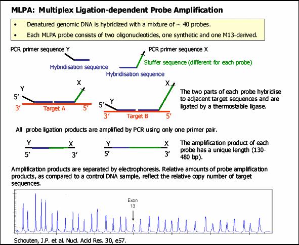 Mlpa+analysis