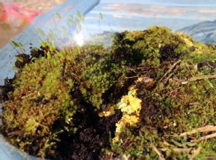 slime and moss