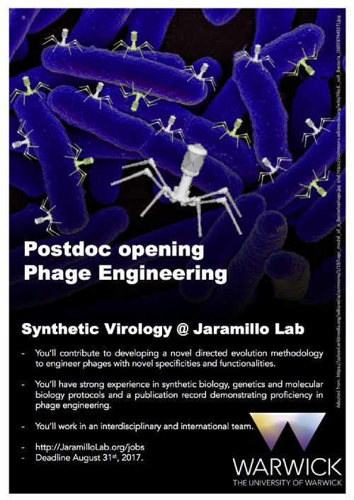 Synthetic phages attacking bacteria
