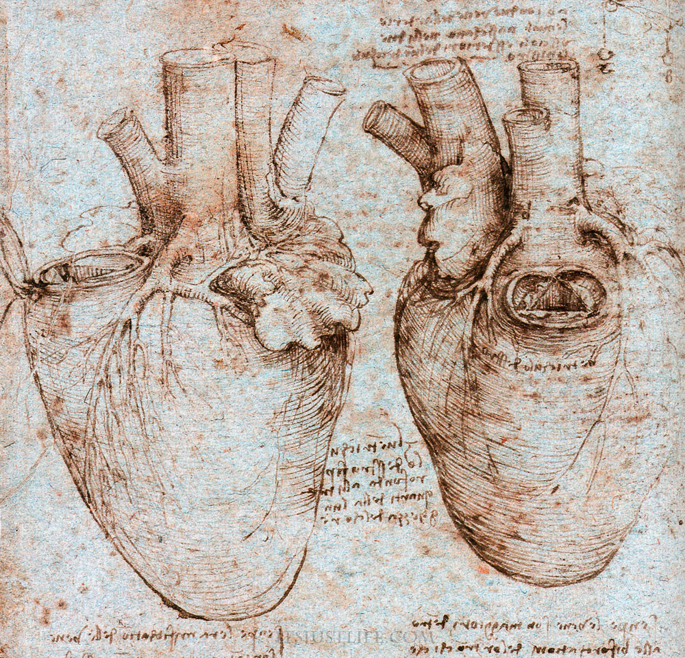 Leonardo Da Vinci and Cardiac Anatomy