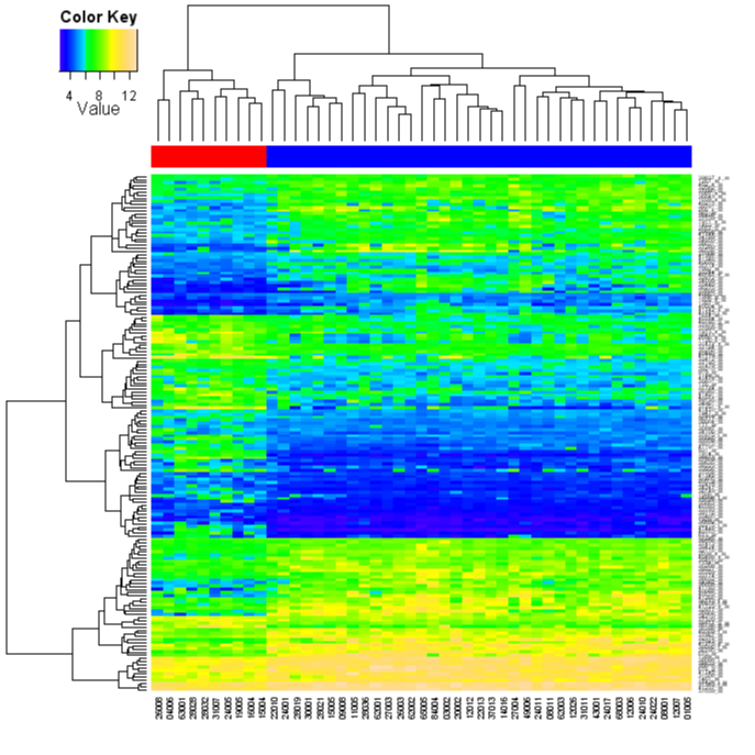 Heatmap Picture Topographical Colours WITHOUT Scaling With Patient Type Colour Bar And Color
