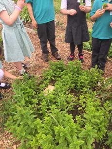 Farm School and children