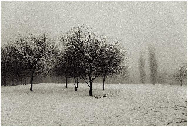 Warwick Snow