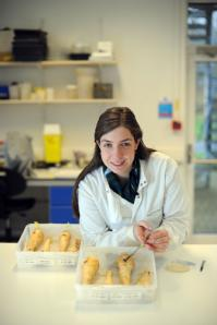 PhD student Lauren Chappell is studying the genetics of parnsips