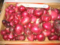some of the onions used in the research