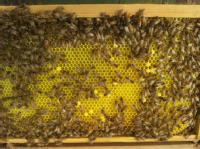 The School of Life Sciences at the University of Warwick has created a mathematical model for bee disease research