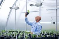 A researcher in the new Phytobiology Facility at the University of Warwick