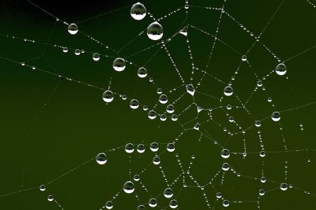 Spiders web with droplets on