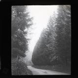 Nant-y-Garth - early forest plantation