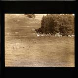 Sheepdog Trials, Rydal Hall