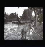 Sheep being herded along street, Zakopane