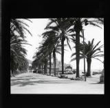 Avenue of palm trees in Sitges