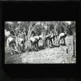Preparing ground for planting rice
