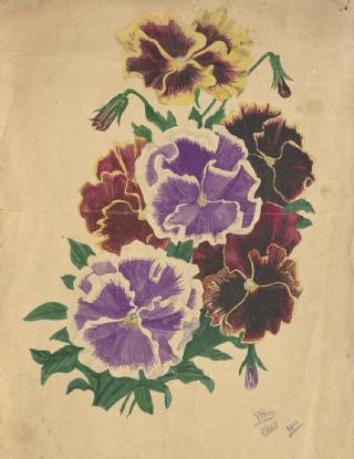 Painting of flowers by W H Stokes, 1911 (in MSS.289/14/3)