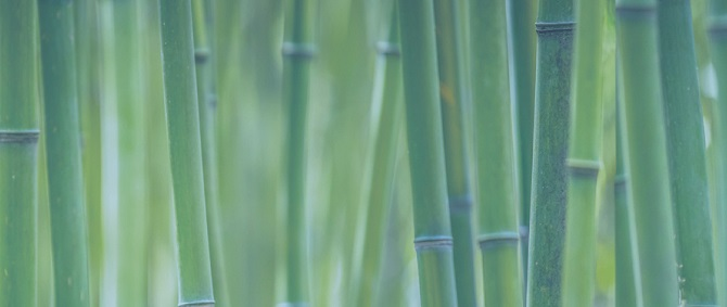 Image of bamboo reeds (with green filter applied)